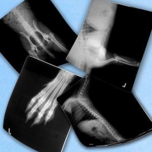 Röntgenbedarf